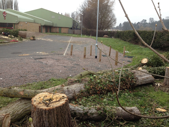 Trees-down-car-park