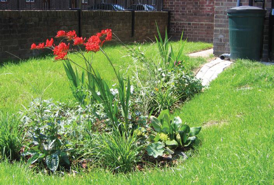 rain-garden-example-550