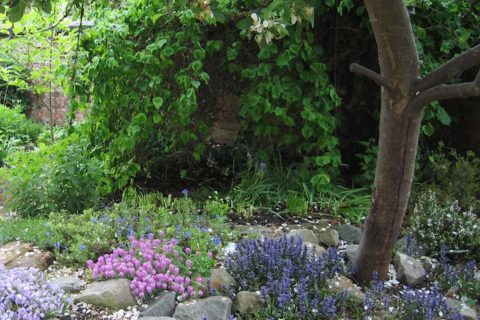 <em>HPH156 : </em>Creating a garden that's biodiverse <u> – with Lisa Kerslake from CIEEM</u>
