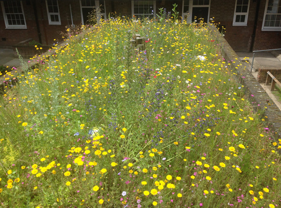 Wildflower-green-roof-social-housing