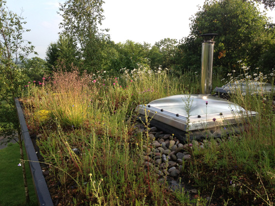 Wildflower-green-roof