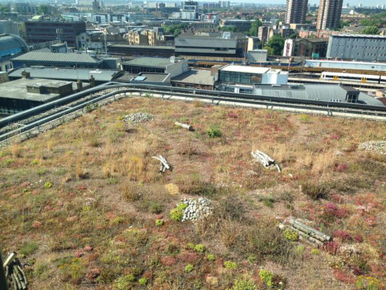 green-roof-in-city