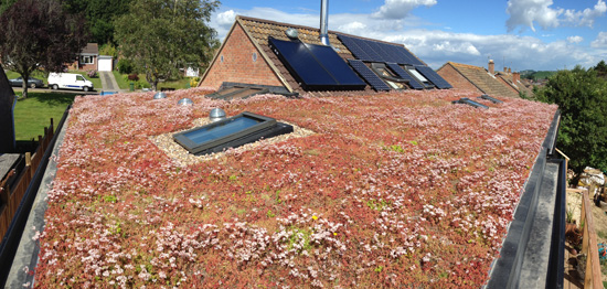 sedum-roof-of-extension